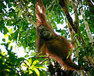 Animals in the wild, including elephants and orangutans play a vital role in seed dispersal, ensuring the sustainability of different species of plants, which in turn serves as our form of food or medicine.