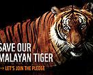 Save our malayan tiger