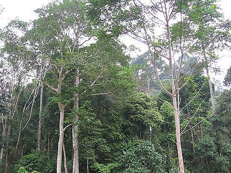 Deramakot forest in Sabah rel=