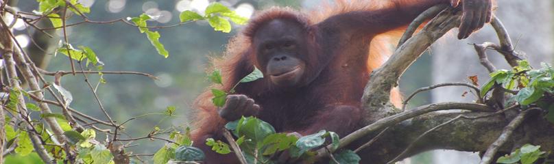 © WWF-Malaysia / Elvin Joseph